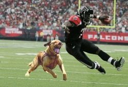 dog attacks receiver
